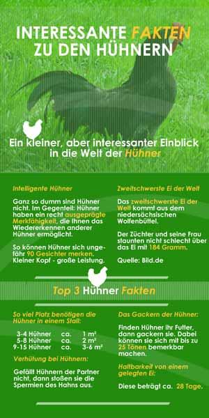 Infografik Hühnerställe
